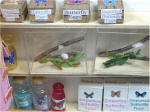The Butterfly Garden by Grace  Butterfly Shed butterfly growing supplies